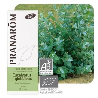 Huile essentielle Eucalyptus globulus bio Pranarôm