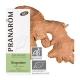 Huile essentielle de gingembre bio - Pranarôm