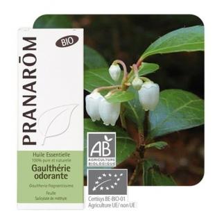 Huile essentielle de Gaulthérie Odorante bio - 10 ml