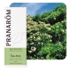 Huile essentielle de Tea Tree Pranarôm