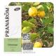 Huile essentielle Citronnier bio Pranarôm