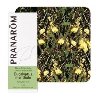 Huile essentielle d'Eucalyptus mentholé Pranarôm