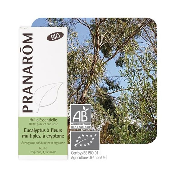 Huile essentielle eucalyptus à fleurs multiples à cryptone Pranarôm