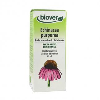 Echinacea purpurea (Echinacée) - 50 ml