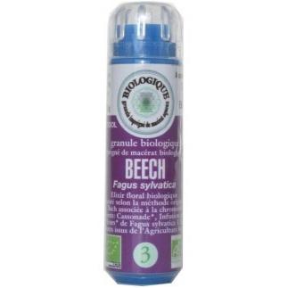 Beech (Hêtre) n°3 - critique, intolérant, rigide