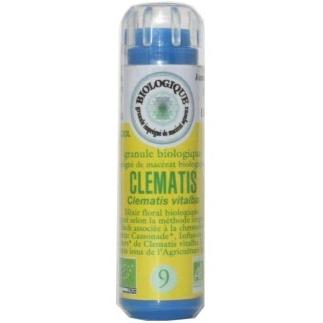Clematis (Clématite) n°9 - rêveur, distrait, fuit la réalité