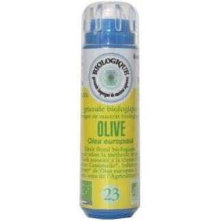 Olive (Olivier) n°23 - épuisement et dépression
