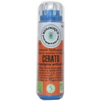 Cerato (Plumbago) n°5 - manque d'intuition, influencable, instable