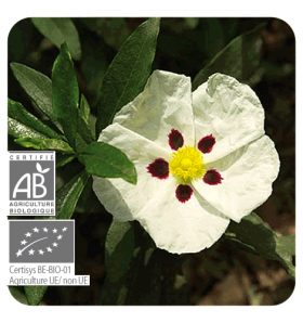 Huile essentielle bio de Ciste Ladanifère - 5 ml