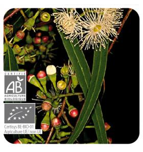 Huile essentielle d'Eucalyptus Radié bio - 10 ml