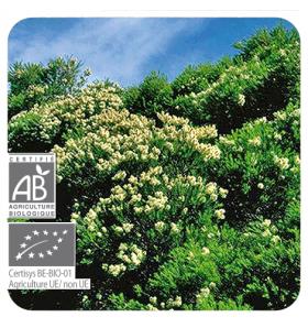 Huile essentielle bio de Tea Tree (Melaleuca) - 10 ml