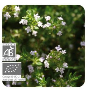 Huile essentielle Thym feuilles de sarriette Bio - 10 ml