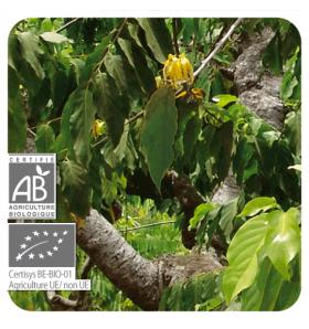 Huile essentielle d'Ylang-ylang totum bio - 5ml
